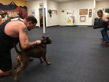 Cerberus K9 2017 Dog Training Classes – Cerberus K9