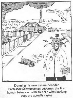 dogtranslator